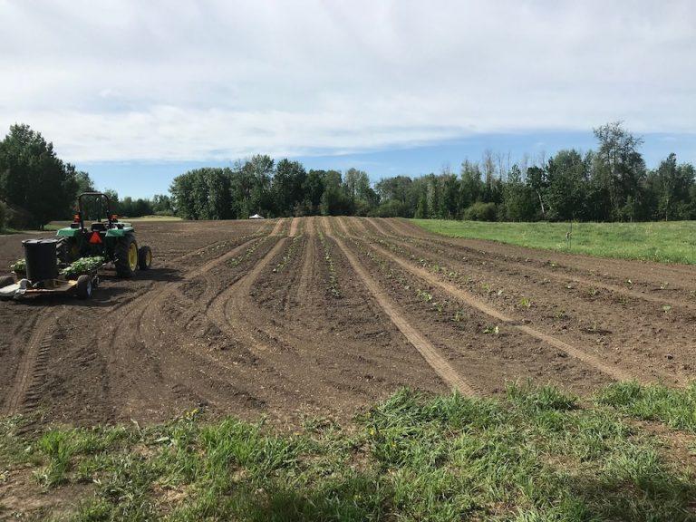 Somerset Farms Pumpkin Planting